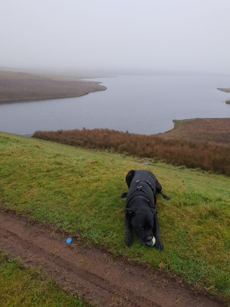 Dog walking inverclyde, dog walking port glasgow, dog walking greenock, dog walking kilmacolm, dog walking inverkip, dog walking langbank, dog walker inverclyde dog walker greenock
