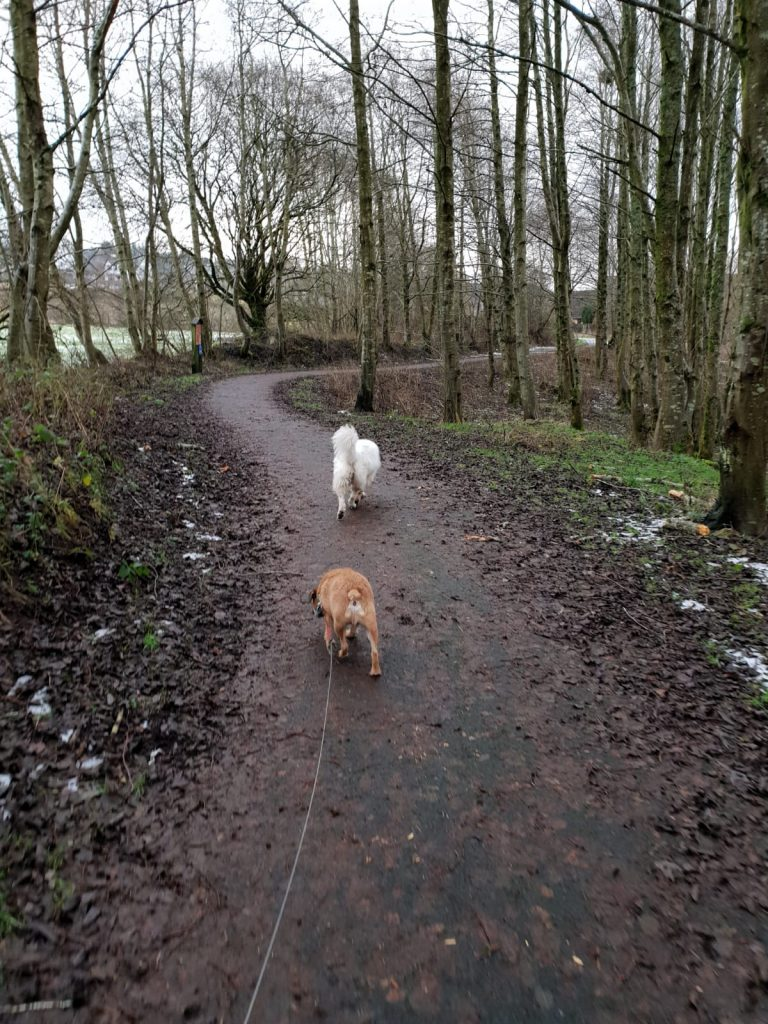 Dog walking inverclyde, dog walking port glasgow, dog walking greenock, dog walking kilmacolm, dog walking inverkip, dog walking langbank, dog walker inverclyde dog walker greenock